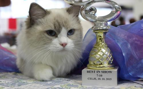International Cat Show Celje 2015